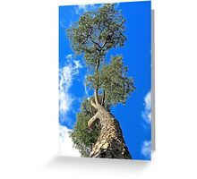 Pine in the Sky Greeting Card