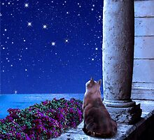 Cats and the Constellations by Kathleen Horner
