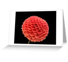 Flower in Blossom Greeting Card