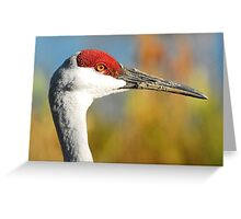 face of a sandhill crane. Greeting Card