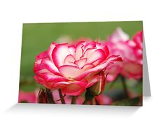 White Rose Edged with Red Greeting Card