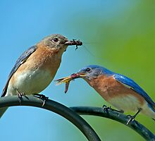 McDonald's Bluebird Style by Bonnie T.  Barry