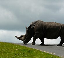 Rhino road to nowhere by DJHardy