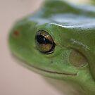 Freddo Frog by Auntymazza