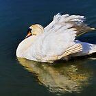 Mute Swan - Impressions by Susie Peek