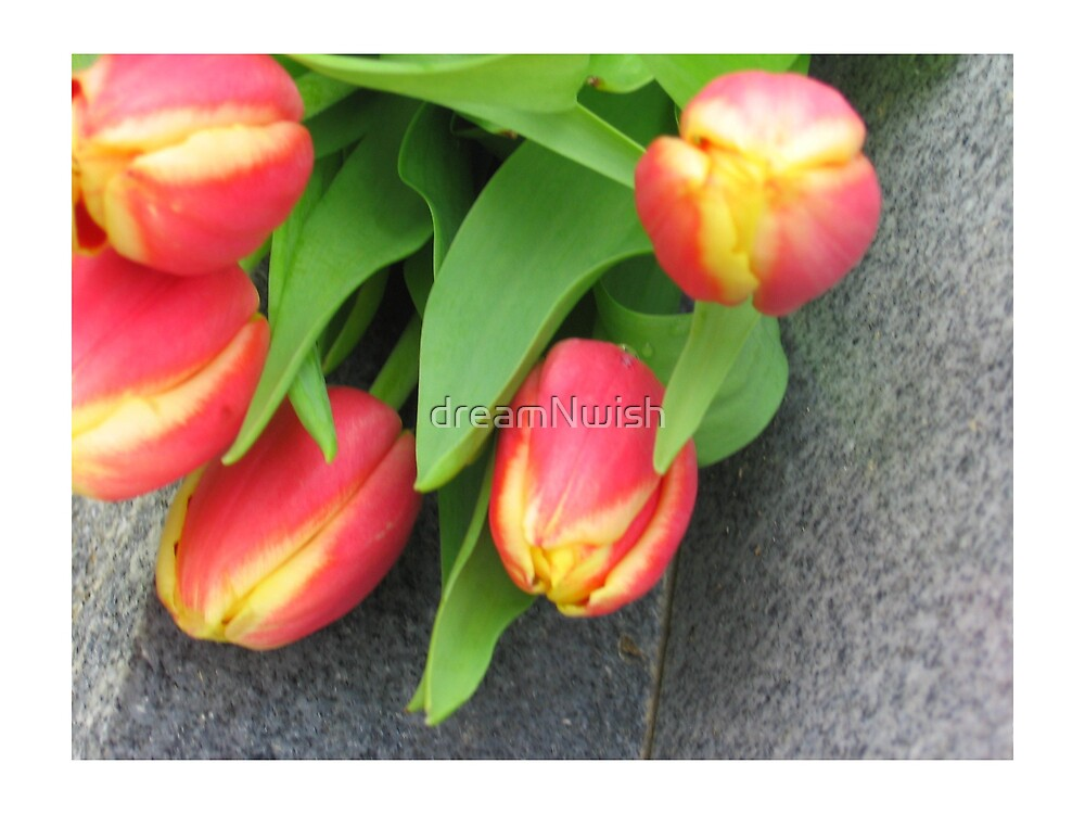 Pink/Orange Tulips (close-up) by dreamNwish