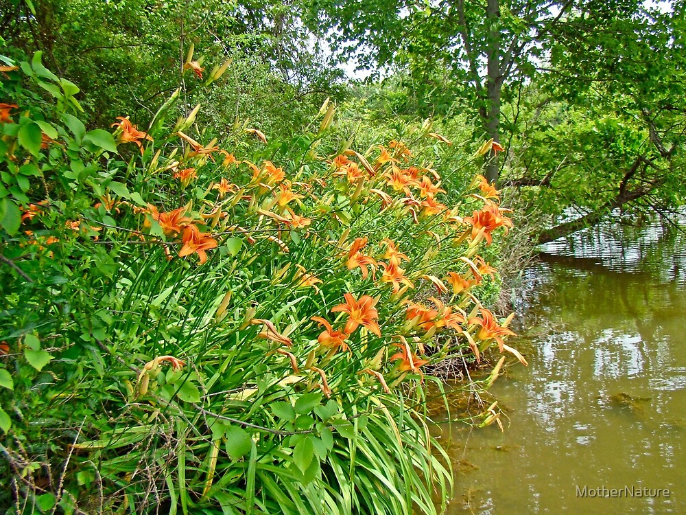 Daylilies By The Reservoir - Hemerocallis by MotherNature