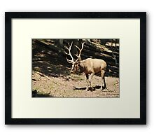 Elk side Framed Print