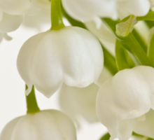 Lily Of The Valley - Macro  Sticker