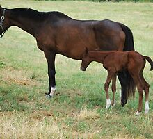 Mom & Baby Horse by sarahshanely