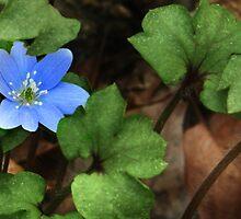 Blue Beauty by Nadya Johnson