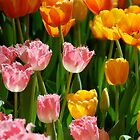 Spring Tulips by pulsdesign