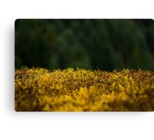 Green Moss Canvas Print