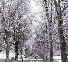 Chippenham Park in Infrared by missmoneypenny