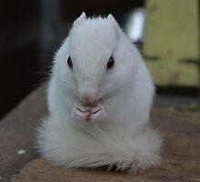 Cute White Chipmunk by MyPixx