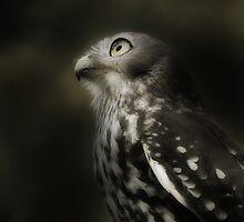 Barking Owl by DanielTMiller