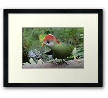 Colourful Feathered Friend Framed Print