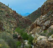 Bear Canyon, Arizona by Timothy  Ruf