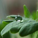 Bubble  by SKNickel