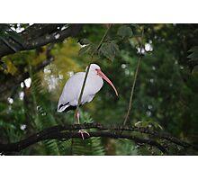 Bird in tree Photographic Print