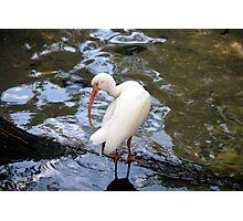 Bird in water Photographic Print