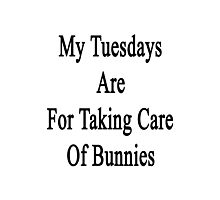 My Tuesdays Are For Taking Care Of Bunnies  Photographic Print