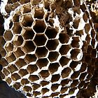 In Side,the Hornet Nest by MaeBelle