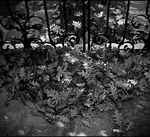 Urban Landscape # 3 Autumn's Gate by Juilee  Pryor