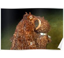 The Giant Pacific Octopus Poster