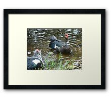 LAUGHING OUT LOUD (LOL) - DUCK STYLE Framed Print