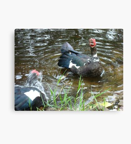 LAUGHING OUT LOUD (LOL) - DUCK STYLE Canvas Print