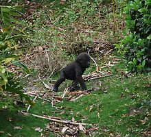 Baby Gorilla by sarahshanely