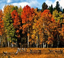 Oxbow Autumn by Brian Kerls  photography