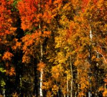 Oxbow Autumn Sticker