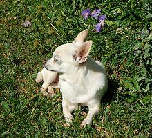 Dog Days of Summer... Solitary Sun Soak  by ys-eye