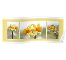 Daffodil Collage Poster