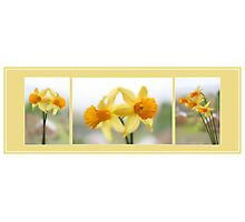 Daffodil Collage Photographic Print