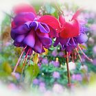 Born of the Purple and Pink by MotherNature2