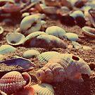 shells by immunetogravity