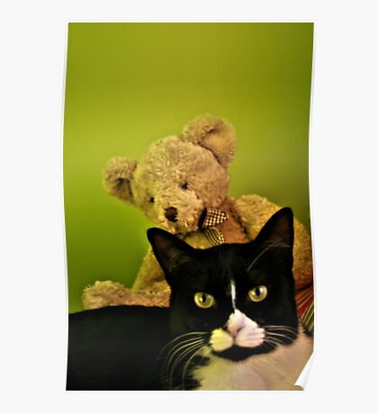 Big Teddy And Tuxedo Cat Poster