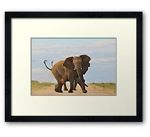 Elephant - Powerful Life Framed Print