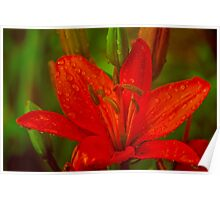 Red Orange Lily With Raindrops Poster
