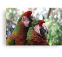 Parrot Couple Canvas Print