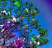 blossoms by velveteen