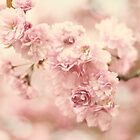 Cherry Blossom Petals by Jessica Jenney