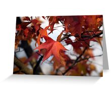 Fall Leaves Zoom Greeting Card