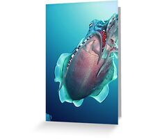 Hooded cuttlefish (Sepia Greeting Card