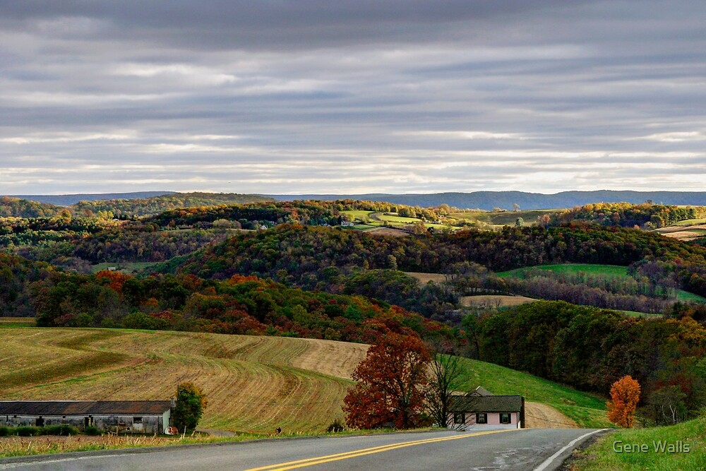 Country View From Rose Valley Road by Gene Walls