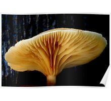 Fungi Season 17 Poster