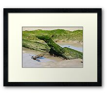 "Nature's ""Green Sea Dragon"" Framed Print"